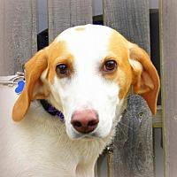 Adopt A Pet :: Mona Lisa - Rocky Mount, VA