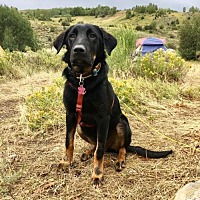 Adopt A Pet :: Barry - Littleton, CO