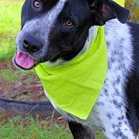 Adopt A Pet :: Mack - Batesville, AR
