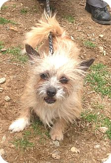 Terrier (Unknown Type, Small) Mix Dog for adoption in Bloomfield, Connecticut - Swirl