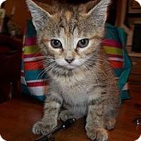 Adopt A Pet :: Bubbles - Acme, PA