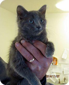 Domestic Mediumhair Cat for adoption in Topinabee, Michigan - Smokey Joe