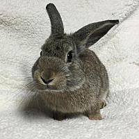 American for adoption in Erie, Pennsylvania - Caesar