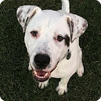 Adopt A Pet :: Dallas - Knoxville, TN
