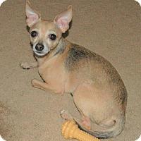 Adopt A Pet :: Jasper - Umatilla, FL
