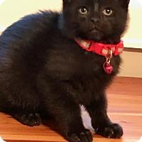 Adopt A Pet :: Sergei - Houston, TX