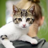Adopt A Pet :: Fireball - Newton, KS