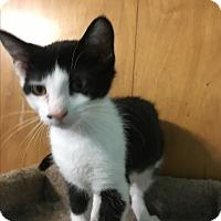 Adopt A Pet :: Henrietta - Richfield, OH