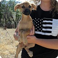 Adopt A Pet :: PINE TREE PUPS E - Corona, CA