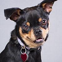 Adopt A Pet :: NED - Pt. Richmond, CA
