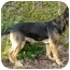 Photo 4 - German Shepherd Dog Dog for adoption in Los Angeles, California - Bonita von Kern