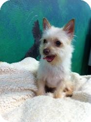 Terrier (Unknown Type, Small) Mix Dog for adoption in Goleta, California - Tuffy