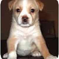 Adopt A Pet :: Annie - Mesa, AZ