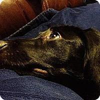 Adopt A Pet :: Daisy Mae - Hastings, NY