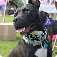 Adopt A Pet :: Luca - Snellville, GA