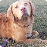 Adopt A Pet :: Daphne - Plainfield, CT