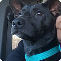 Adopt A Pet :: Hallie and Dale - Brattleboro, VT