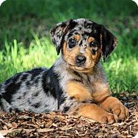 Adopt A Pet :: *Hamlet - PENDING - Westport, CT