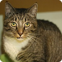 Adopt A Pet :: Judge - Canoga Park, CA