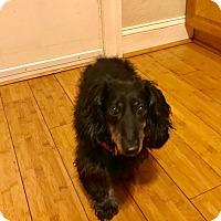 Adopt A Pet :: Winnie - Virginia Beach, VA