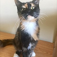 Adopt A Pet :: Bernie - La puente, CA