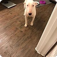 Adopt A Pet :: Louisa - Houston, TX