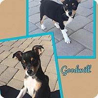 Adopt A Pet :: Goodwill - Scottsdale, AZ