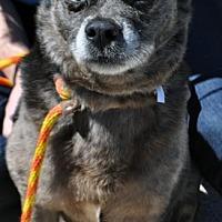 Adopt A Pet :: Harlee - Fairfax Station, VA