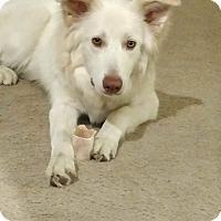 Adopt A Pet :: Kane - Clackamas, OR