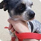 Adopt A Pet :: Zia