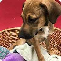Adopt A Pet :: Chloe - Decatur, AL