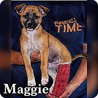 Labrador Retriever/Chihuahua Mix Puppy for adoption in Smithtown, New York - Maggie