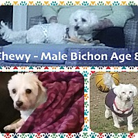 Adopt A Pet :: Chewy - East Hanover, NJ