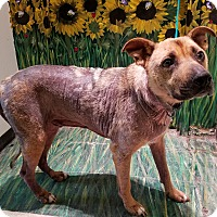 Adopt A Pet :: Marvin - West Babylon, NY