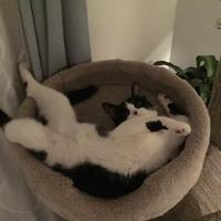 Adopt A Pet :: Eva - Athabasca, AB