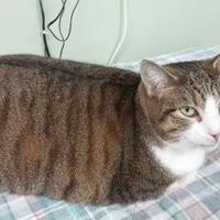 Adopt A Pet :: Aya - Erie, PA