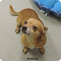Adopt A Pet :: Poncho - Washington, GA