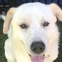 Adopt A Pet :: Trevor - Darien, CT