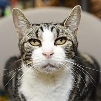 Adopt A Pet :: Loki - Whitehall, PA