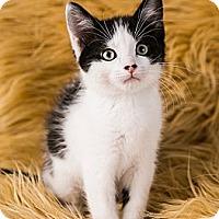 Adopt A Pet :: Bobby - Eagan, MN