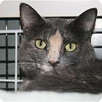 Adopt A Pet :: Princess Kitty - Frederick, MD