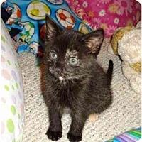 Adopt A Pet :: Margaret - Richmond, VA