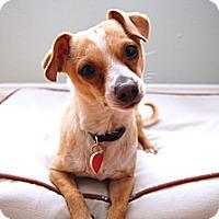 Adopt A Pet :: Riley- I am a LOVE BUG! - Redondo Beach, CA