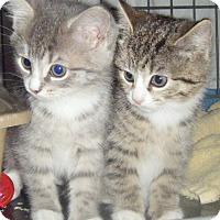 Adopt A Pet :: Candy & Dandy - Kensington, MD
