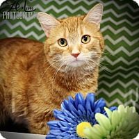 Adopt A Pet :: Marigold - Plymouth, MN