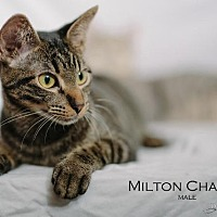 Adopt A Pet :: Milton Chance (Courtesy Post) - St. Louis, MO