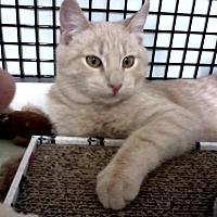 Adopt A Pet :: Bradley - San Fernando Valley, CA
