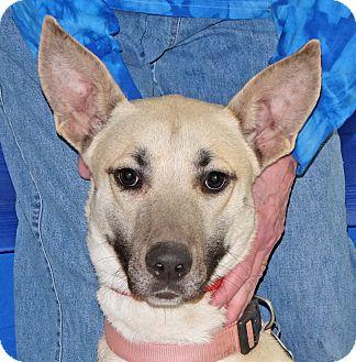 Shepherd (Unknown Type) Mix Dog for adoption in Spokane, Washington - Sky