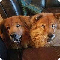 Adopt A Pet :: Maggic - Sacramento, CA