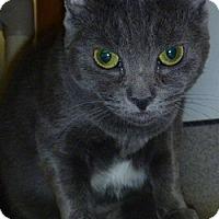 Adopt A Pet :: Hilary - Hamburg, NY